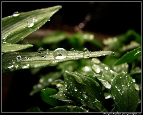 Rain Drops by Ranjeeth Nagarajan.