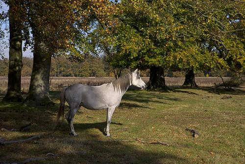 unicornio-k