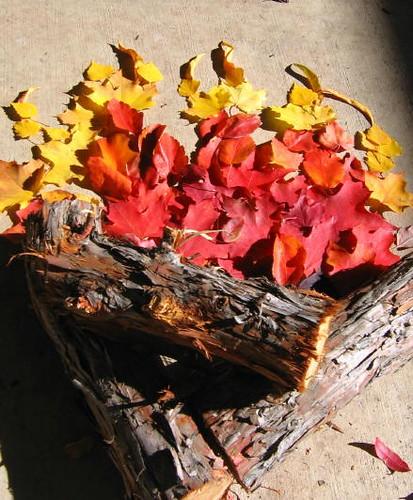 My Fall campfire 3