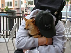 sanfrancisco dog pet cute hug san francisco sfo kai rest pooch shibainu shiba ghirardelli taro ghirardellisquare mameshiba tar0 tar0shiba taroshiba shibataro shibatar0 tar0theshiba httptar0shibatumblrcom