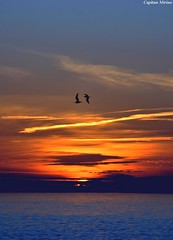 Birds in the sunset (Capitan Mirino ( il Tartarughino )) Tags: sunset sea italy sun roma colors birds tramonto mare uccelli sole colori fiumicino lazio smrgsbord potofgold supershot bej mywinners abigfave diamondclassphotographer theunforgettablepictures platinumheartaward theperfectphotographer goldstaraward rubyphotographer yourcountry flickrlovers