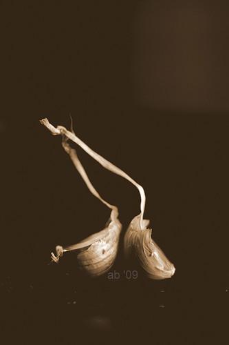 garlic power-sepia