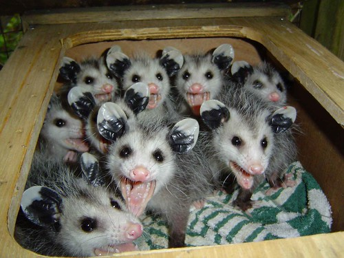 In the words of Dame Edna: Hello possums!