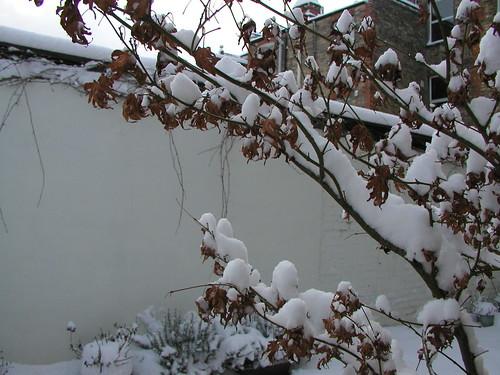 London Snow HY 0109 020