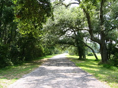Bicycle path (Frank Kehren) Tags: canon georgia island spanishmoss jekyll canonpowershots45