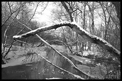 Through the Woods B&W (Sunset Photography) Tags: trees winter blackandwhite bw usa nature minnesota rural photoshop canon austin river rebel midwest february doityourself xsi dyi cs3 hormelnaturecenter sunsetphotography 450d canonrebelxsi flickrlovers jodynewman