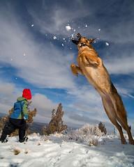 Wondergirl (Michael Bollino) Tags: dog oregon centraloregon jump shepherd echo germanshepherd chomp wondergirl anawesomeshot snowballchomping