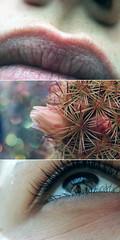 J'adore. ([L] di .zuma) Tags: macro canon 350d bokeh occhi dettagli fiore subsonica labbra sfuocato piantagrassa aliscure taglianoilcielo
