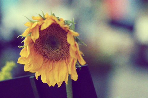 """And the yellow sunflower by the brook, in autumn beauty stood."""