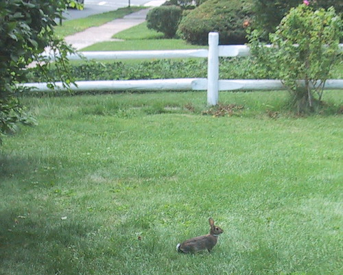 Bunny in the Courtyard by you.