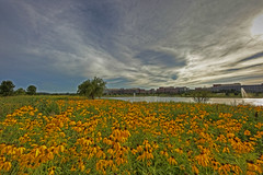 Wild Flowers (Todd Ryburn) Tags: flowers trees sky lake nature water canon buildings wildflowers dslr coulds llens canon5dmarkii canon14mmf28iillens