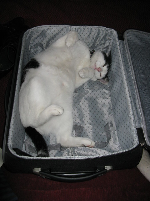 Cat in a Suitcase. Ah'm jus' chillin!