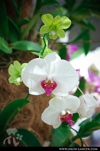 P_flower15