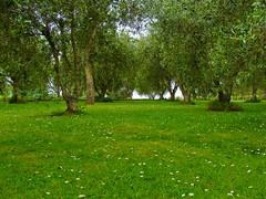 Heaven on Earth (Kamalpreet S. Sawhney) Tags: newzealand green beautiful flora heaven european great calm winery auckland alpine enjoy amen endless waihekeisland greenry greentint providencephotos wwwprovidencephotosin