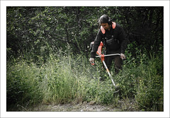 röjarbete (Anders Mohlin) Tags: sverige vr gnesta srmland lillasigtuna