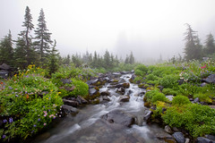 Mount Rainier - 2009 (Jesse Estes) Tags: sunrise mountrainier wildflowers paintbrush lupine 1635ii 5d2 jesseestesphotography