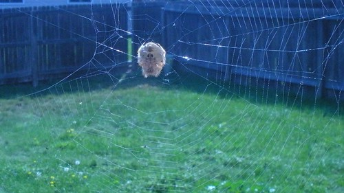 my pet spider by A writer afoot.