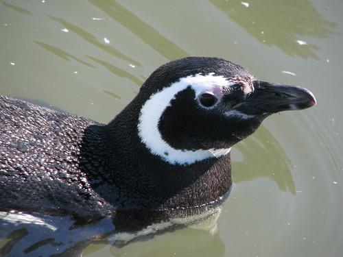 CRAM penguin