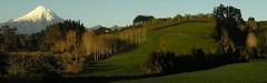 DSCN6520A EMF (hottriggeredkiwi) Tags: newzealand spring taranaki mttaranaki