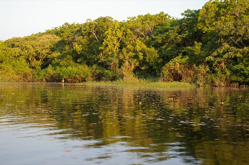 brazil amazon manaus amazonas