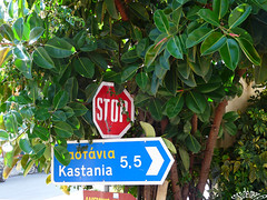 fikus (seychellois) Tags: travel flowers trees orchid nature palms blumen greece lilac worldwide tulip griechenland lilie schwertlilie fikus panasoniclumixdmcfz18 tavirozsa