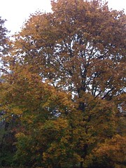 RainyFoliage_102809bjpg