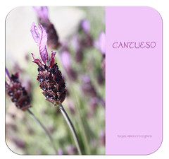 Cantueso (Ente inexistente) Tags: pink flowers naturaleza flores macro primavera fleurs spring flora rosa fiori printemps florsilvestre cantueso
