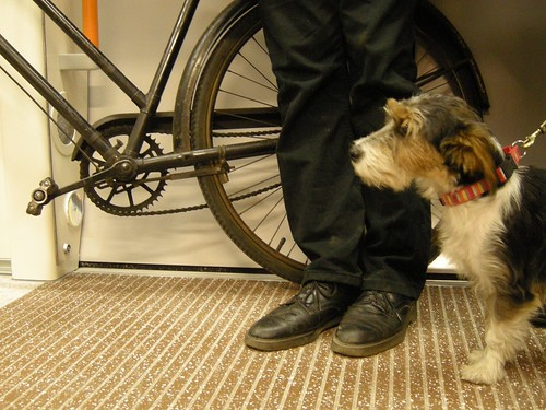 The East London Line's first dog meets the East London Line's first bicycle by Martin Deutsch