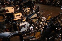 Wild Hog Rally 1243 (E Z Rider Pics) Tags: leather chopper harley chrome harleydavidson biker trike helena musicfestival cherrystreet motorcyclerally bigdog bikerchick custompaint bikerbar deltablues theguesswho helenaarkansas wildhogrally customharleys kffaradio thebluetulip wildhogrally2010 wildhograllyhelenaarkansas awildhogrally thewildhogrally 2010422wildhogfestival