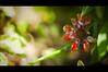I Choose You (michaeljosh) Tags: sunlight flower bokeh shade darkside nikkor50mmf14d ndfilter project365 ichooseyou cinematiccrop rottingflower nikond90 beautyinugliness michaeljosh