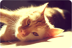 one. (Bildersommer) Tags: portrait pet cats rot animal cat ginger tiere katze katzen haustier kater bernstein tierfotografie