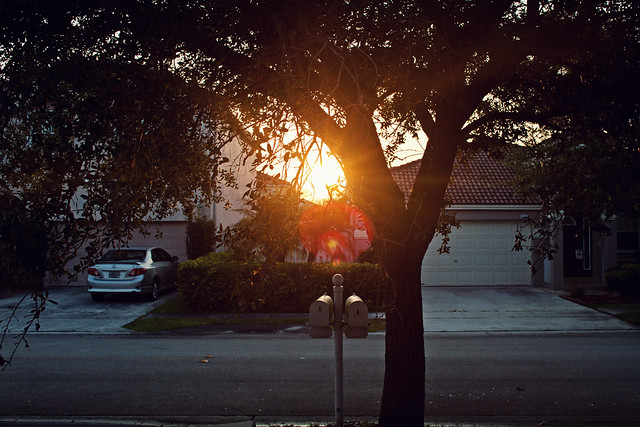 golden hour tree flare