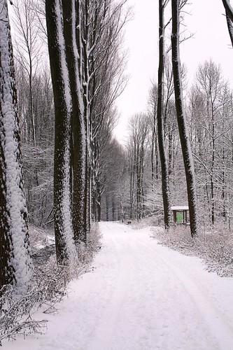 Snow walk!