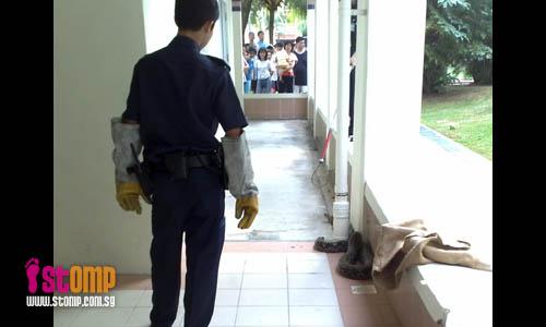 10 ft python found at Pasir Ris HDB void deck