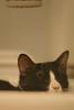 Bring me some hot water, please. (mazarin♥) Tags: black cat funny ears samson bidé