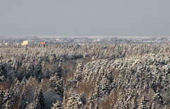 The limitless expanse of the forest (Osdu) Tags: winter snow nature forest russia russie risi nga rusland rusia  russland ryssland  ruska krievija venj rssia rusio rusko rusija  ruscia  oroszorszg      russja  arusia rrusia  rusk rsia ngls anruis ynroosh rsya   ruxitln ruslaand   rusiye rtia rusyjo   rusn rosj