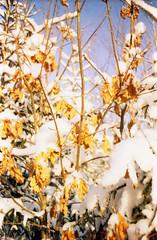 Untitled-16 (ermolindaniil) Tags: christmas winter wild snow les forest 35mm frost branch country pole evergreens greens icicle zima praktica moroz frostwork russkaya iney frostart macrorevuenon olgovo snawdrift kodakcoloriso100 ennamnchen
