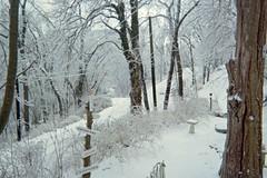Lower yard and Hillside Avenue (junebug_1944) Tags: icestorm eurekaspringsar january2009