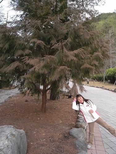 你拍攝的 7雙色樹。