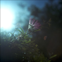 (zenog) Tags: kodakportra160nc rolleiflex35f rolleinar2 autaut earlysunnymorning sundaymorningmist