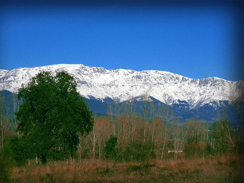 Montaña y árbol