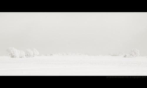 despre alb ca zapada (III)