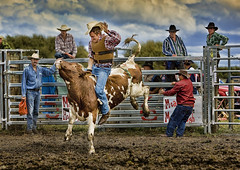Chilliwack Fair Rodeo
