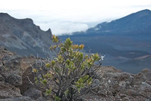 Maui-2009 72