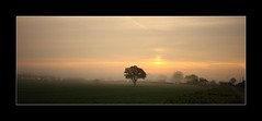 lone tree (explored #248) (felt_tip_felon) Tags: morning panorama mist tree field sunrise platinumphoto vosplusbellesphotos