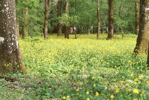 Giallo giallo giallo / Yellow yellow yellow