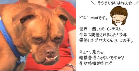 世界一醜い犬コンテスト 2009 優勝