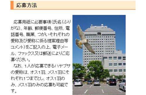新潟県庁のハヤブサ
