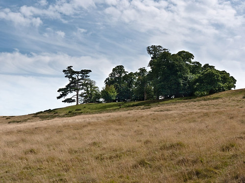 stand of trees on hill