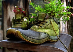 L. L. Bean (Professor Bop) Tags: flowers shoes boots massachusetts marthasvineyard edgartown llbean olympuse510 professorbop